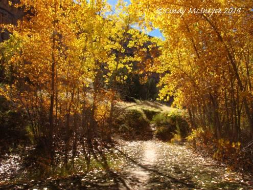 Autumn-cottonwoods,-Echo-Park-(27)-copy