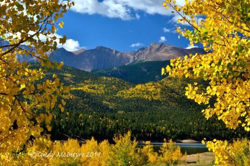 Pikes Peak framed by aspen