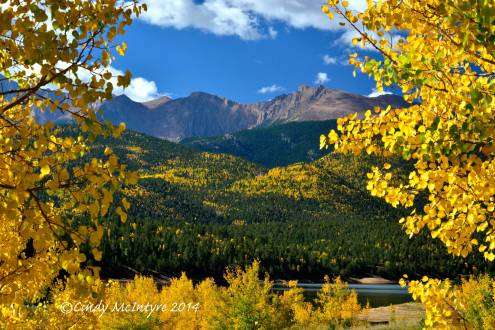 Pikes Peak framed by aspen