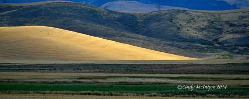 Sandhill-Cranes,-Hayden,-Colorado-(4)-copy