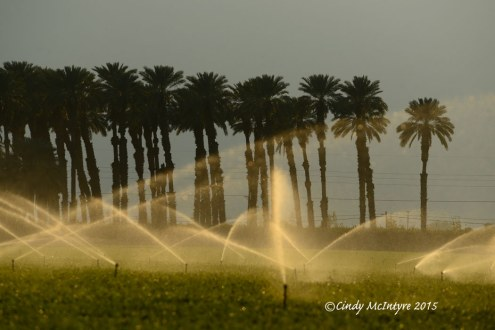 Imperial-Valley-CA-irrigation-and-palms-copy