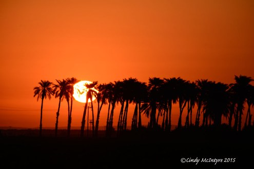 Sunrise in the palms, Mecca, Calif.