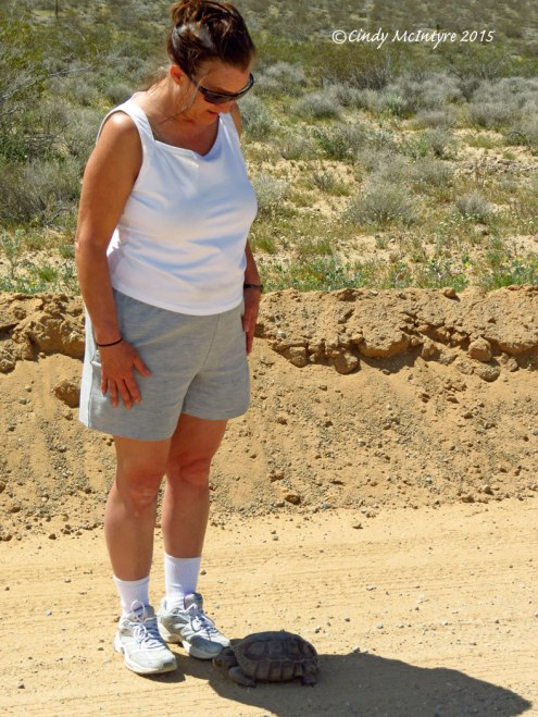 Desert-Tortoise,-Gopherus-agassazii,-Barstow-CA-(31)-copy