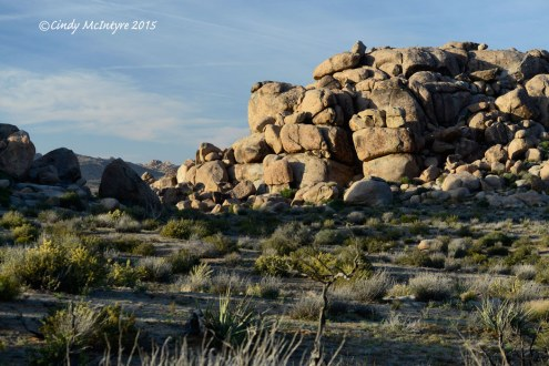 Mojave National Preserve, near Mid-Hills Campground