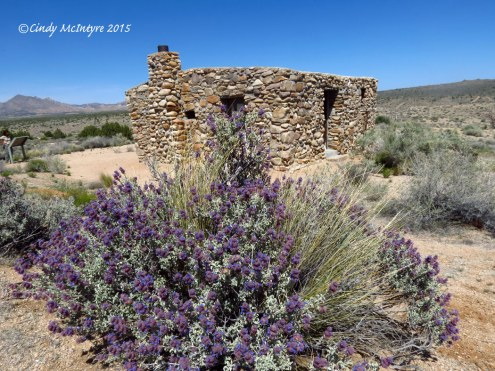Rock Springs House and desert purple sage (Salvia sp.)