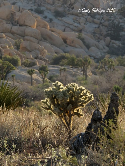 Barker-Dam-Trail,-Joshua-Tree-NP-CA-(1)-copy