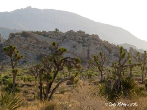 Barker-Dam-Trail,-Joshua-Tree-NP-CA-(3)-copy