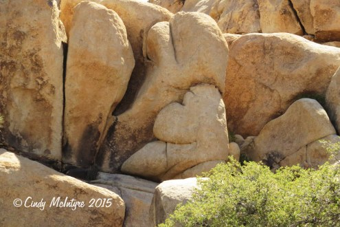 Barker-Dam-Trail,-Joshua-Tree-NP-CA-(39)-copy