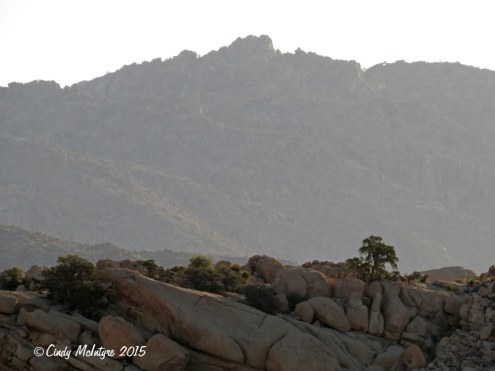 Barker-Dam-Trail,-Joshua-Tree-NP-CA-(4)-copy