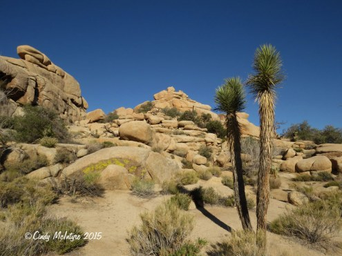 Barker-Dam-Trail,-Joshua-Tree-NP-CA-(9)-copy