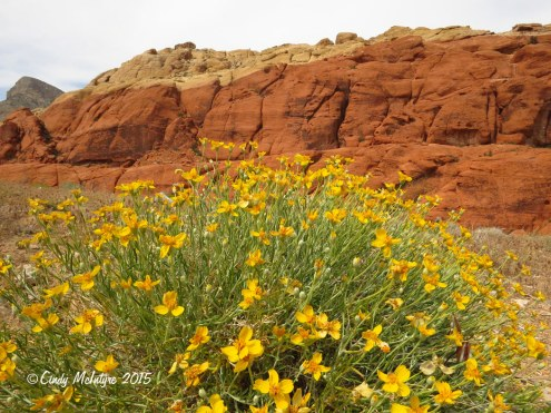 Calico-Hills,-Red-Rock-Canyon-NV-(13)-copy