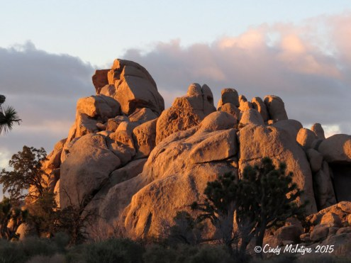 Hiddey-Valley-dawn,-Joshua-Tree-NP-CA-(21)-copy-2