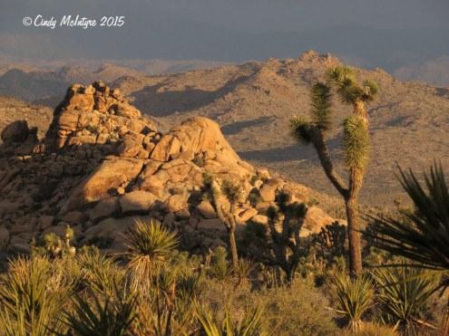 Joshua-Tree-NP-Hidden-Valley-area-at-dawn-(50)-copy-2