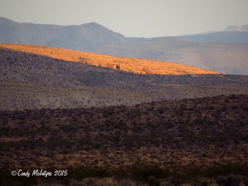 Red-Rock-Canyon-Conservation-Area,-NV-(13)-copy