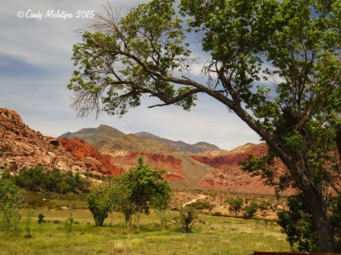 Rock-Spring-trail,-Red-Rock-Canyon-NV-(10)-copy
