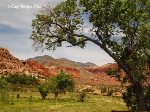 Rock-Spring-trail,-Red-Rock-Canyon-NV-(10)-copy