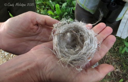 I think this was identified as a lesser goldfinch nest that had fallen on the ground
