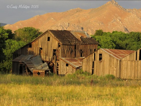 Old barns, Audubon Kern River Preserve at sunset