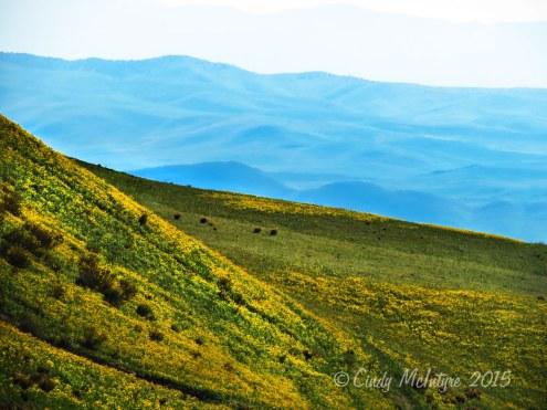 Near Carrizo Plains National Monument