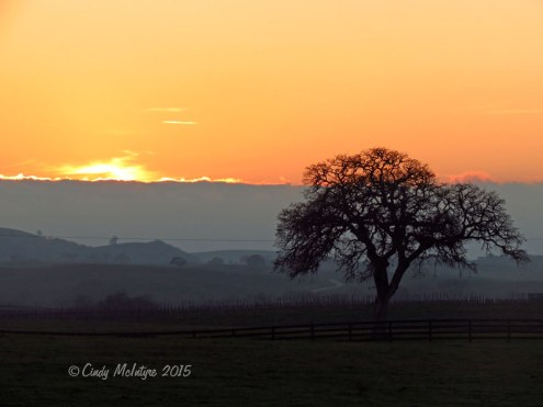 Oak-tree-at-sunset,-Paso-Robles,-CA-(9)-copy