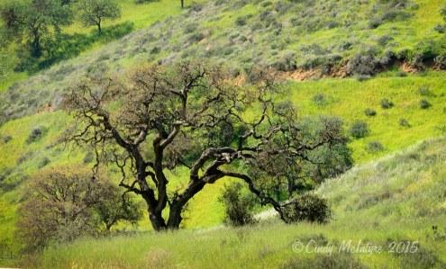 Road-to-Pinnacles-NM,-CA-(1)-copy