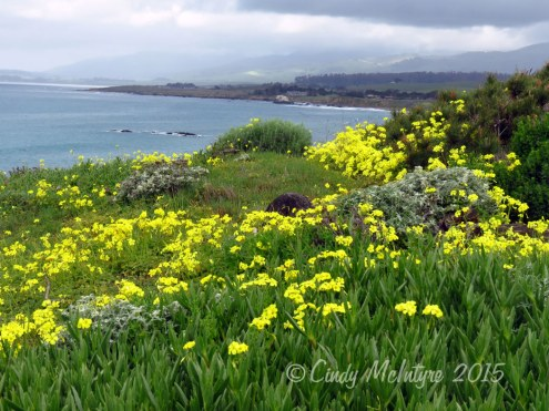 San-Simeon-CA-Feb-(4)-copy