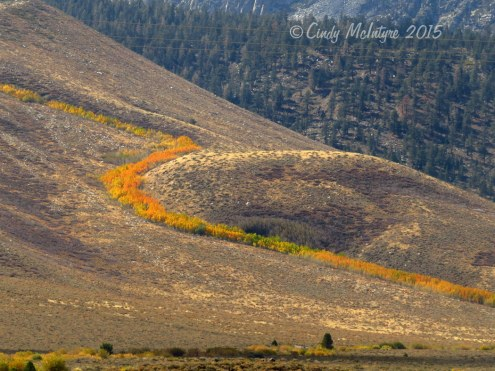 Aspen-ribbon,-Mammoth-Lakes-CA-(7)-copy