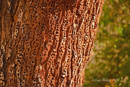 Granary Tree