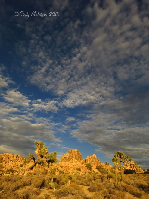 Hidden-Valley-Trail,-Joshua-Tree-NP-CA-(5)-copy