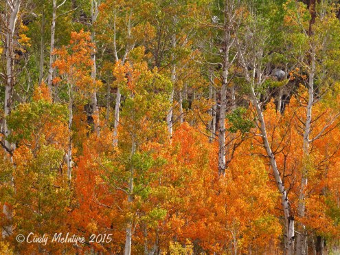 McGee-Creek-Canyon,-E-Sierras-CA-(16)-copy