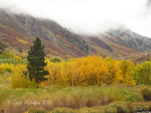 McGee-Creek-Canyon,-E-Sierras-CA-(41)-copy