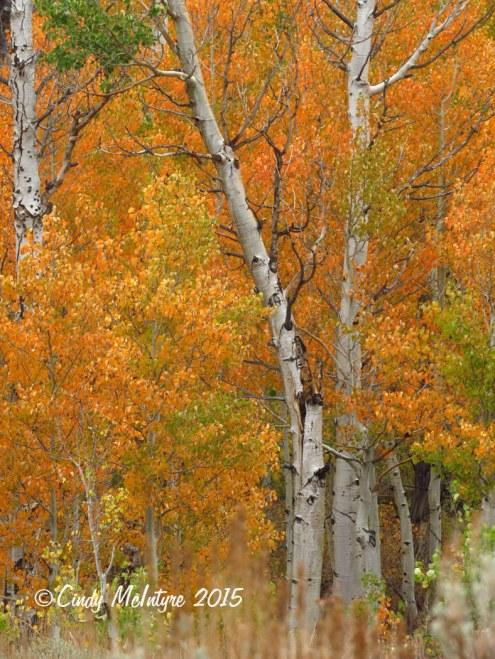 McGee-Creek-Canyon,-E-Sierras-CA-(6)-copy