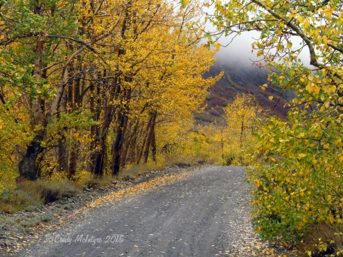 McGee-Creek-Canyon,-E-Sierras-CA-(69)-copy