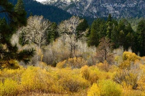 Taylor Creek, South Lake Tahoe