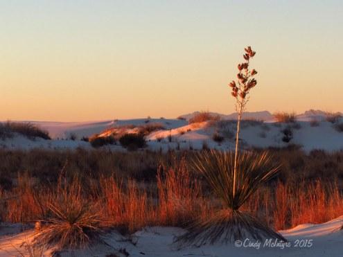 White-Sands-Natl-Mon-NM,-dawn-(14)-copy-2