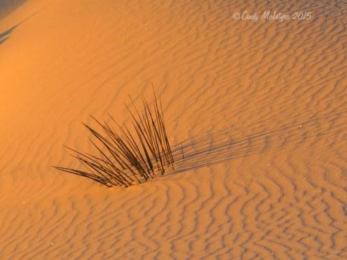 White-Sands-Natl-Mon-NM,-dawn-(20)-copy