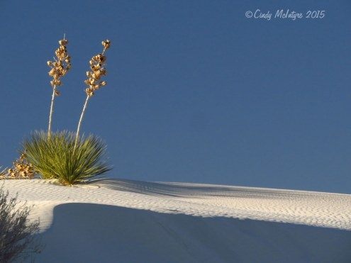 White-Sands-Natl-Mon-NM-evening-(2)-copy