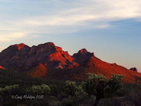 Ajo-Mt-Scenic-Drive,-Organ-Pipe-NM-AZ-(89)-copy-2
