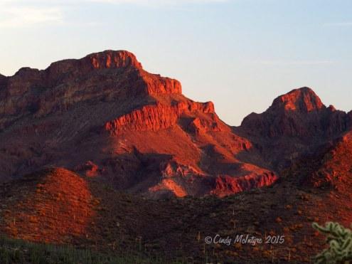 Ajo-Mt-Scenic-Drive,-Organ-Pipe-NM-AZ-(92)-copy