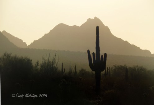 Kofa NWR, Arizona sunrise