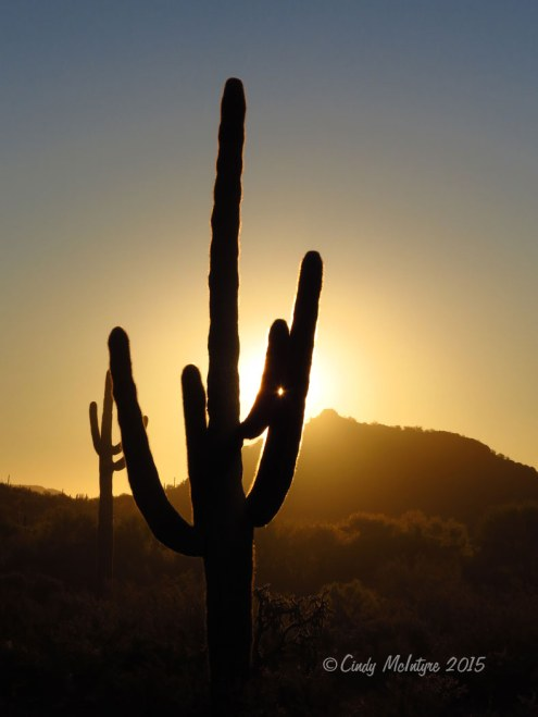 Sunrise-saguaro,-Organ-Pipe-NM-AZ-(17)-copy-2