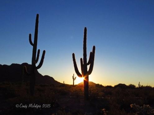 Sunrise-saguaro,-Organ-Pipe-NM-AZ-(27)-copy
