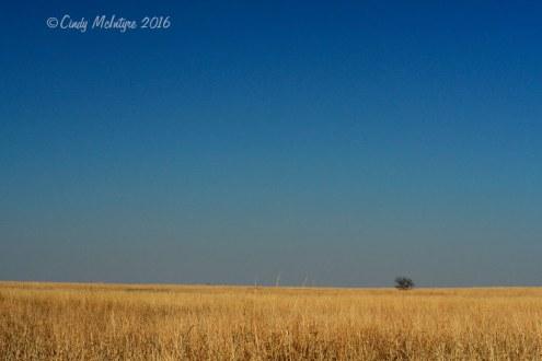 Oklahoma grassland