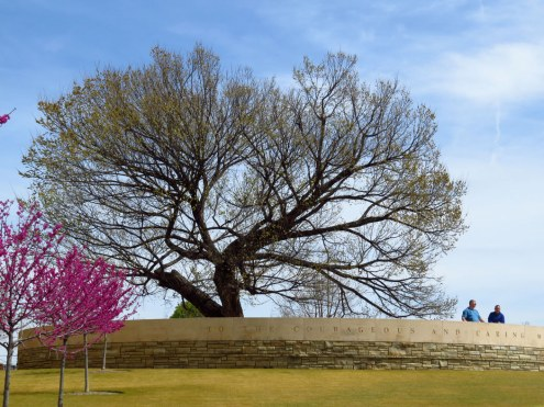 Survivor Tree - an American elm