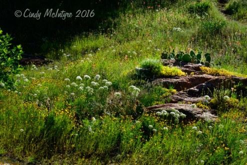 A rock garden