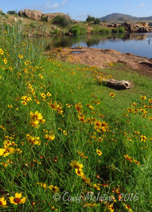Lake Quanah Parker and plains coreopsis