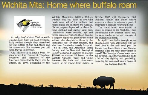 buffalo-roam-1