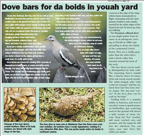 dove-bars
