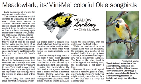meadowlark-mini-me-2-11-16
