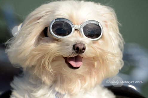 Mikey and his Doggles